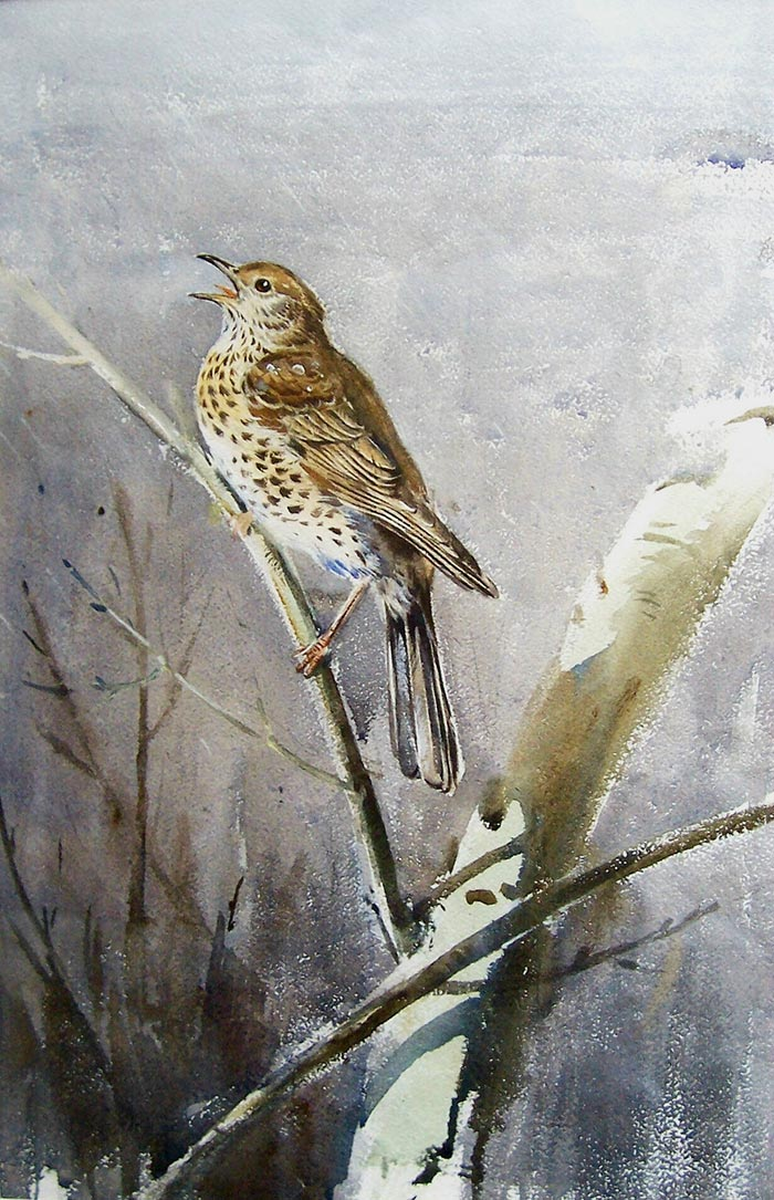 Thrush Singing in the Rain - Eileen Soper