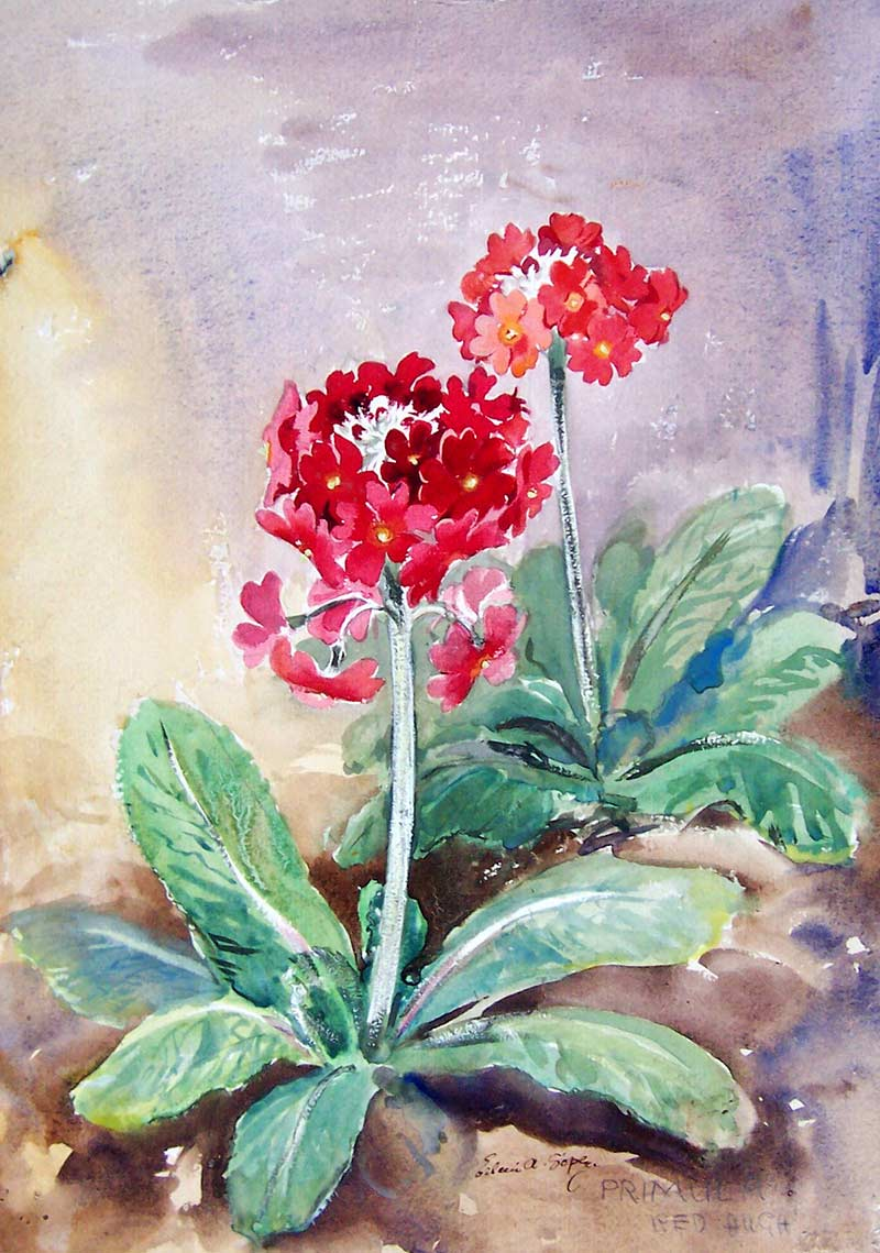 Red Flowers, The Soper Collection