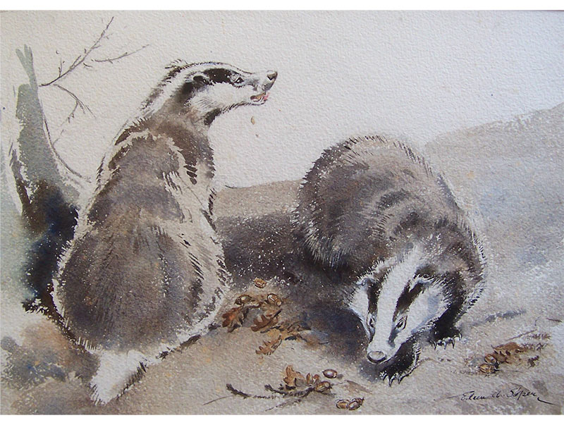 Two Badgers with Acorns - Eileen Soper